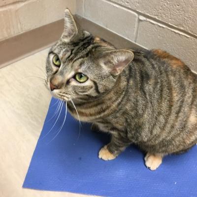 Environmental Enrichment May Help Treat >> Cat Enrichment Animal Friends Inc
