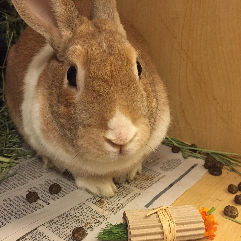 Rabbit Enrichment   Animal Friends, Inc.