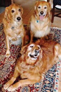 Polka, Timmy and Tucker