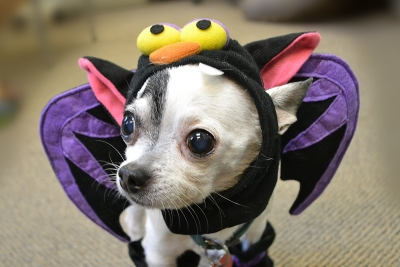 Halloween Party for Pets