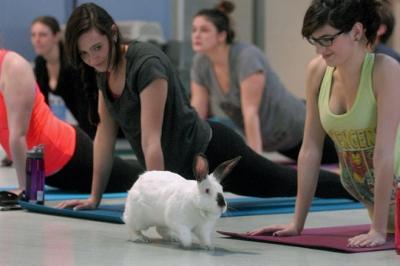 Bunny Yoga!