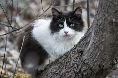 Build a Community Cat Shelter