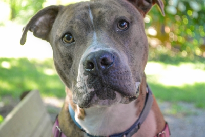 CLE – Taking Action Against Dog Fighting, Puppy Mills and Animal Abuse